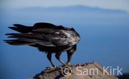Raven, La Palma