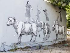 Cows, BA
