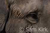 Elephant, Nepal