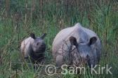 White Rhino, Nepal