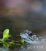 Frog, London