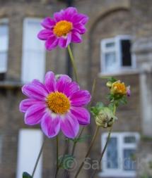 November Blooms