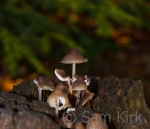 Fairytale Mushrooms, Sydenham Hill Wood